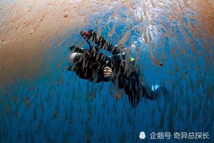 """儲量5億噸的""""南極磷蝦"""",中國或將成為""""海上金礦""""黑馬"""
