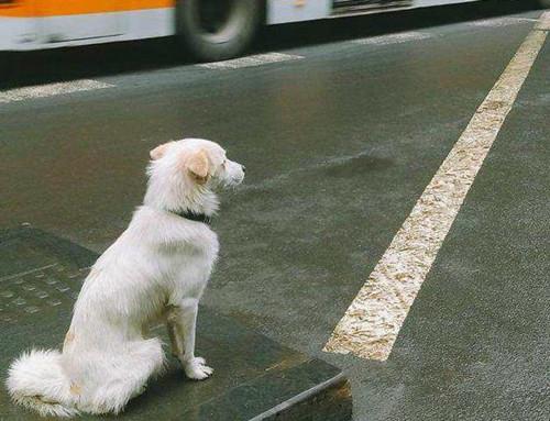 史上最暖心的忠犬:主人意外去世它等候9年,至死未等到主人回來