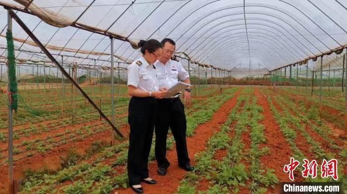 「云南省高原特色农产品」云南出口农产品逆势增长 前10月同比增长8.2%