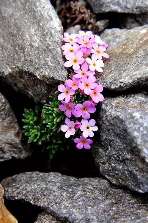 石缝中的坚强生命,不可思议!