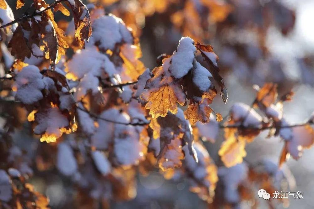 「未来15天雨雪天气」最高气温降至0℃!新一轮雨雪天气到来!