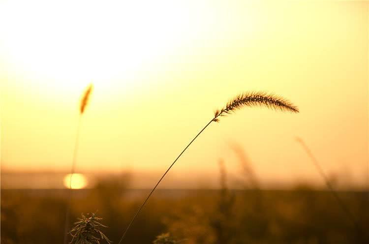 唐诗:单身久了,看什么都眉清目秀;离家久了,看哪里都像故乡