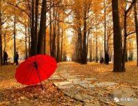 心理测试:三只红伞,哪一只让你更耀眼?测你是否有机会成为明星