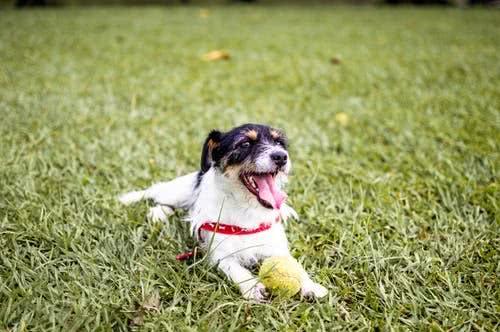 <b>辟谣:狂犬病并非只有狗狗才会导致,这些误区大家都应该了解</b>