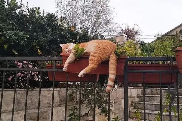 猫睡觉的姿势,可能比你还奇怪……