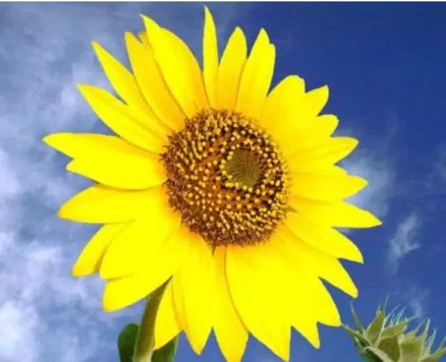 心理测试:4朵富贵花,哪朵最金贵?测你近期有什么好事降临!