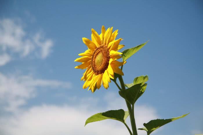 喜欢太阳的8种花,越晒越爱开花,你家阳台缺一盆