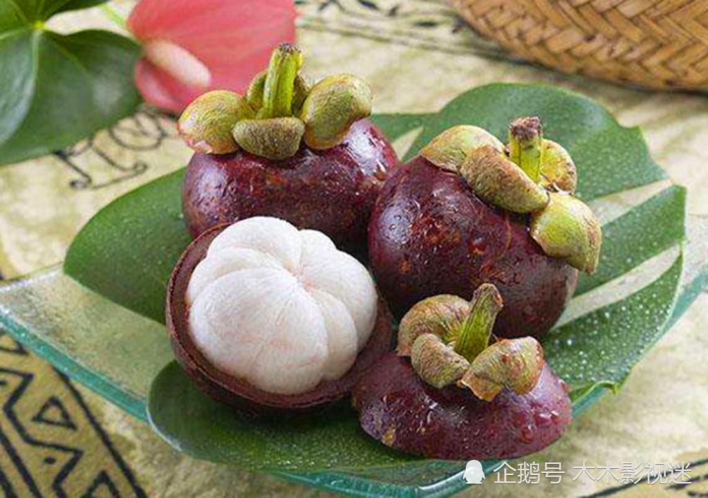 山竹很多人爱吃,见过山竹树吗?一棵树密密麻麻的果子!