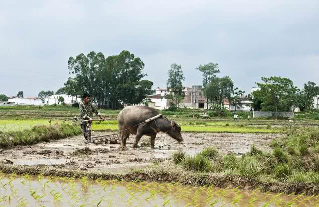 疫情期间,在农村能在地里干活吗?