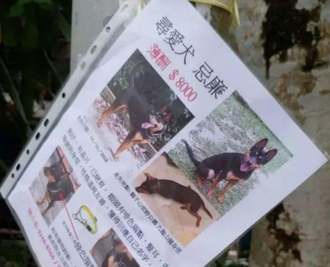 狗狗走失的112天,主人酬8000美金找狗:再渺茫也不愿放弃