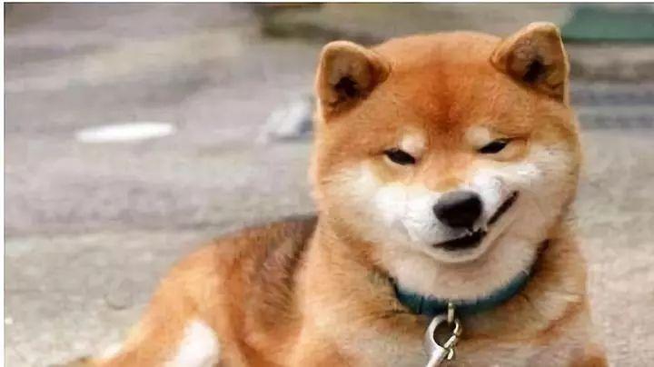 柴犬为什么毛色不好看看起来颜色深