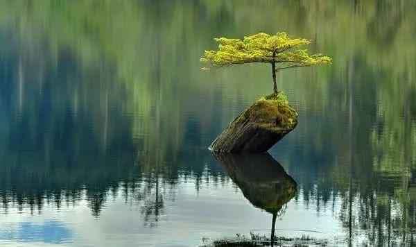 """现实版""""树坚强"""",生命总会找到出路"""