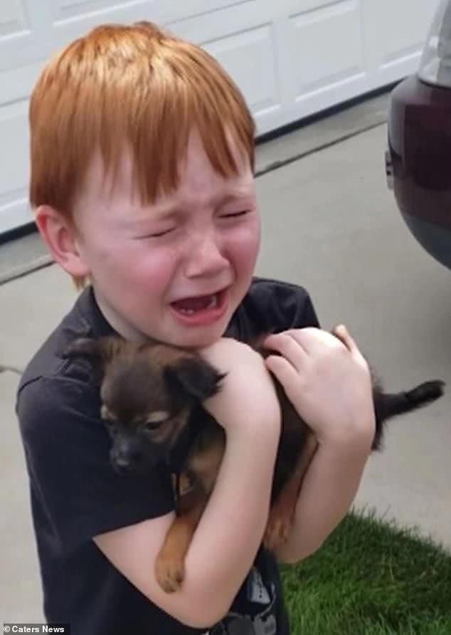 暖心!美6岁男孩为买狗攒18个月零花钱,梦想意外成真后大哭