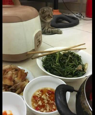 铲屎官做了一桌子的菜,猫主子斜着眼往这边看,还挺矜持的嘛