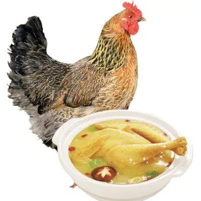 90后女化妆师转行来养鸡 一只鸡卖398元到底凭什么?