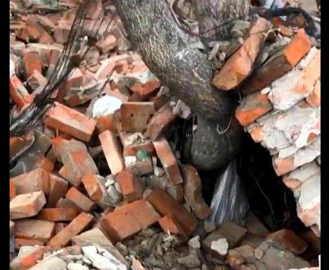 小土狗差点被砖头砸死,后来被国外家庭收养还上了电视,完成逆袭