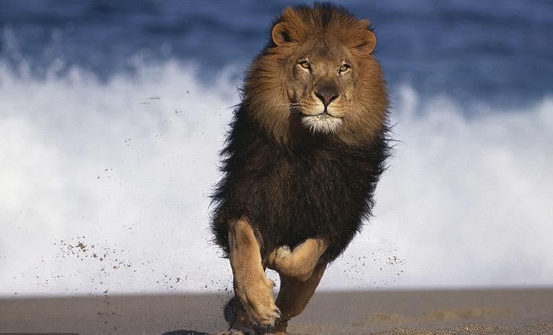 轻易不要跟狮子座交往,坚强勇猛,不信你试试看