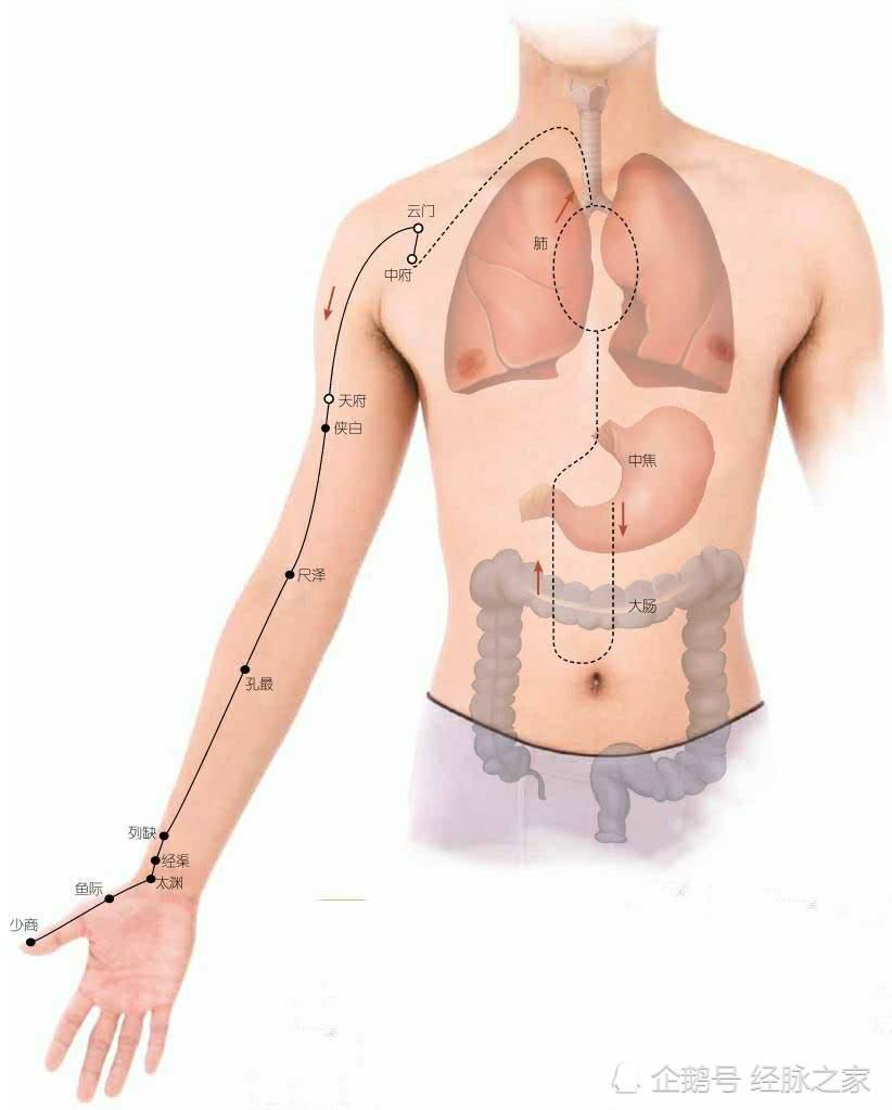 试一下这个方法,经脉循行针刺分寸牢记不忘!