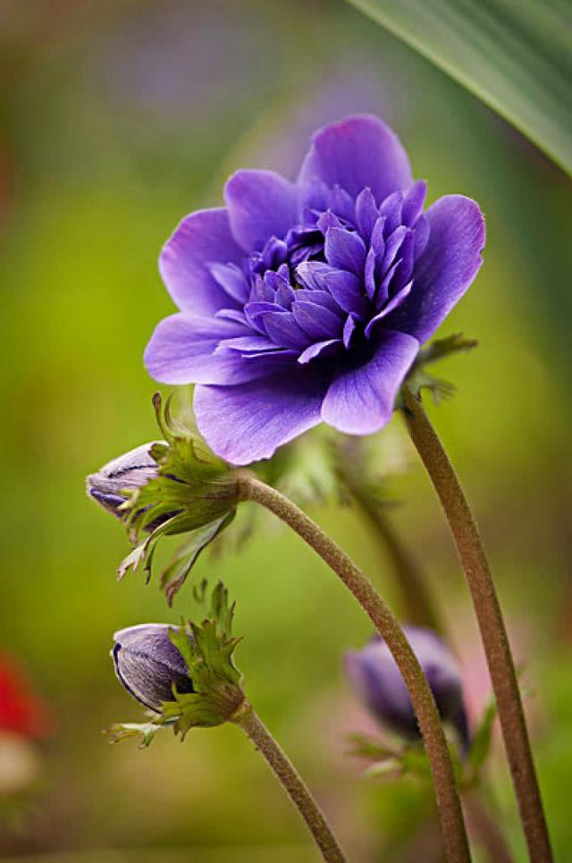 心理测试:你觉得哪朵花最有灵气?测你是不是一个有心机的女孩