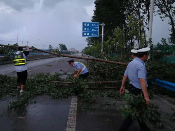 大风、暴雨突袭漯河,省道上大树被拦腰刮断