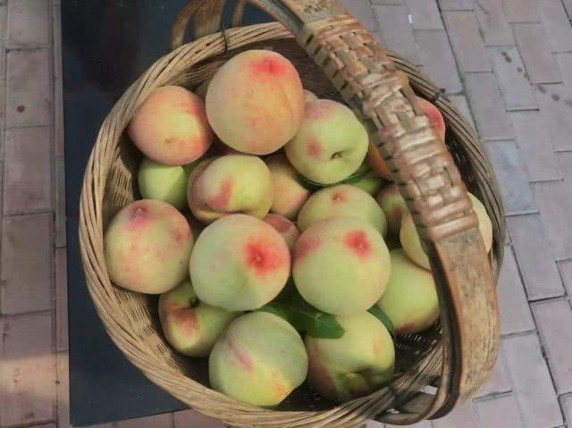 """<b>""""4种""""水分很多的水果,桃子上榜,图3是夏天人们最爱吃的</b>"""