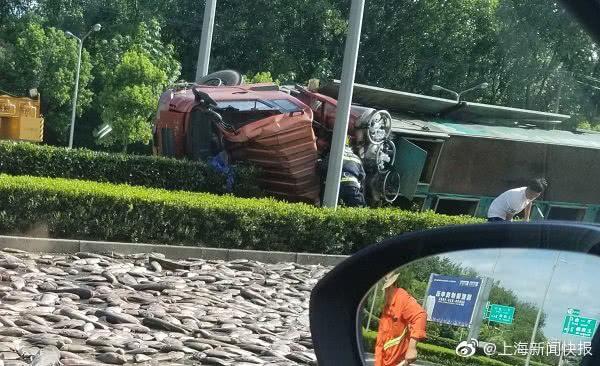 """上海徐浦大桥惊现""""路面烤鱼""""?四车相撞,有一辆是运鱼货车"""