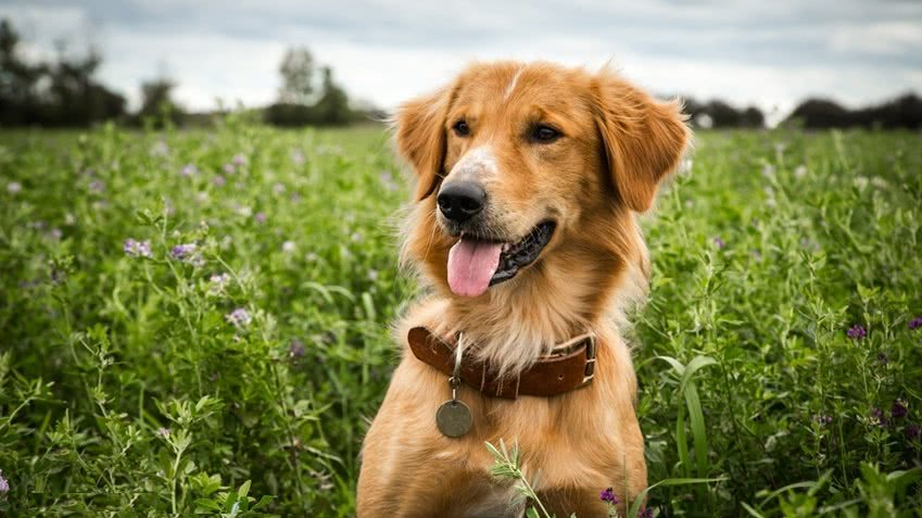 一条狗的使命:小狗为了找回主人,不断轮回转世,终于和主人重逢