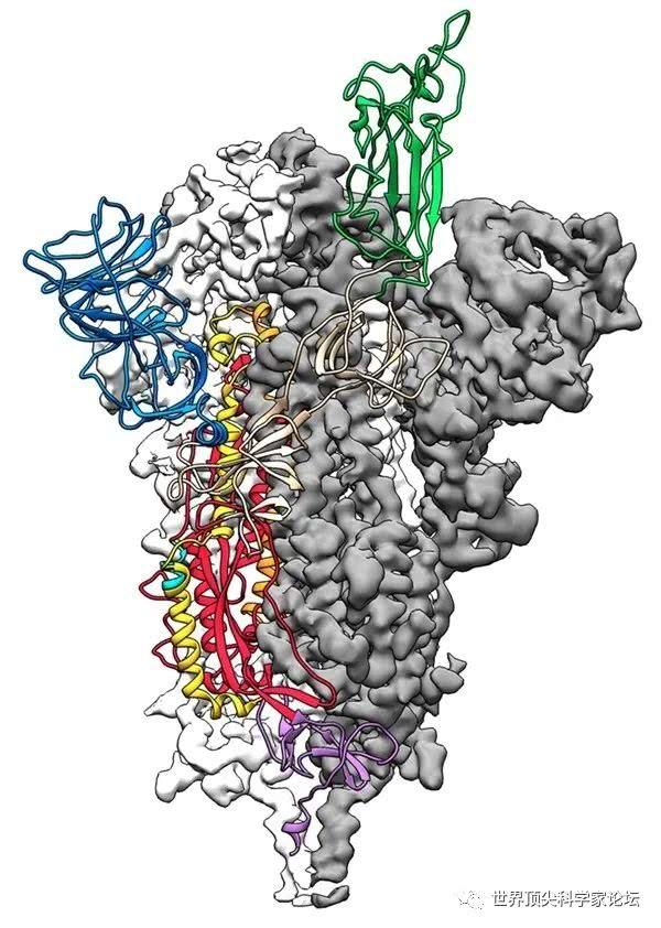 """诺奖技术加持,科学家获得新冠病毒""""原子级""""图像"""