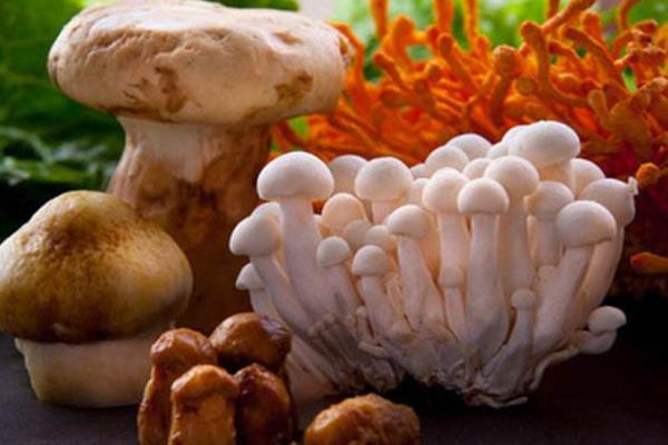 关于菌菇冷门知识,你了解多少?又吃过哪些?
