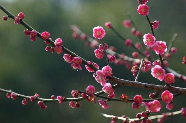 苏轼晚年所写的一首词,在美景中抒发伤情,深受杨慎的赞赏!