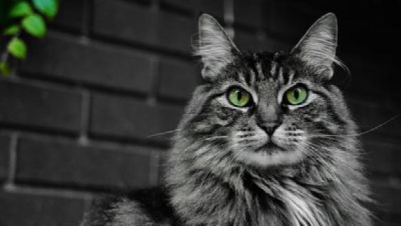 """猫被古人视作""""暗夜巫神"""",它真的能看见人类看不见的事物?"""