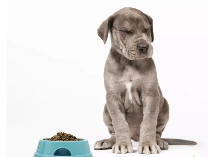 <b>你一定得知道的6种狗狗常见皮肤病</b>
