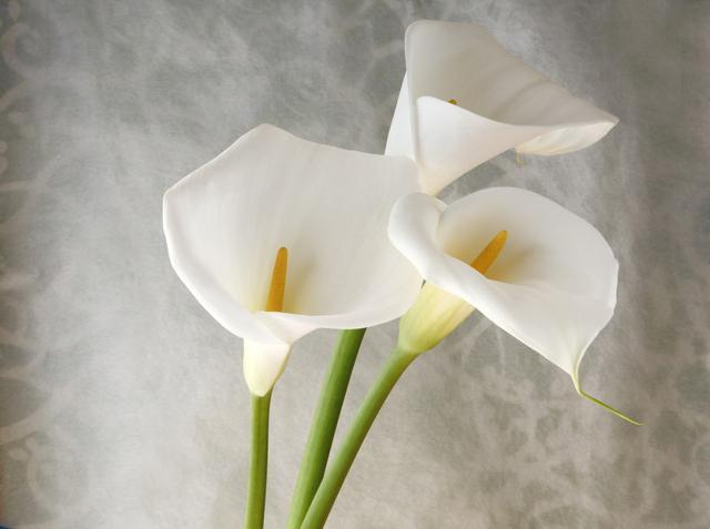 <b>欧美国家新娘捧花的常用花,竟然也是埃塞俄比亚的国花!</b>