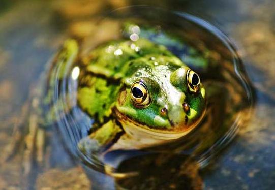 连恐龙都不是对手的魔鬼蛙,证明了板块漂移说,科学家都感到惊讶