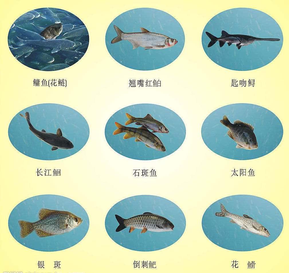 长江里从古至今,灭绝了多少水生物