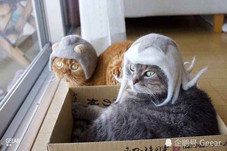 日本夫妇用喵星人的毛制作猫毛帽子,是要用可爱侵略地球吗?