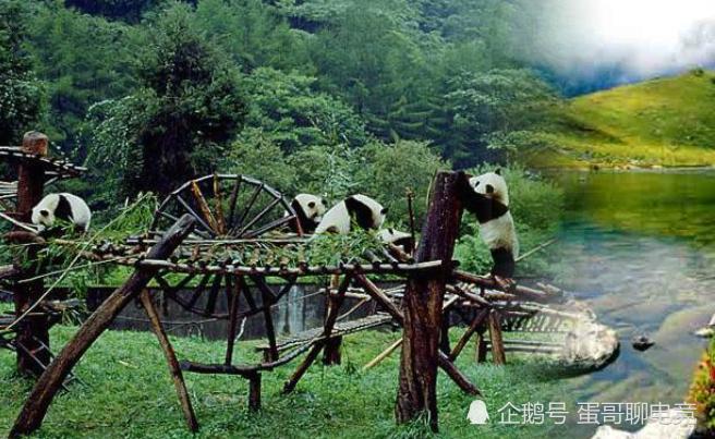 四川冷知识,四川吃麻比吃辣历史还悠久,你知道么?