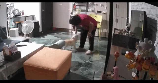 起初不愿养狗的妈妈,现在却和狗狗一起在家里尬舞,真香定律?