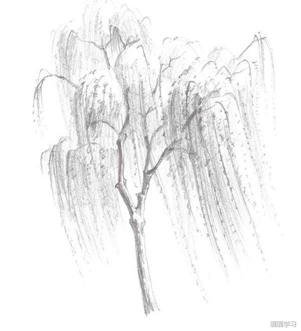 素描垂柳柳条 素描垂柳的绘画步骤二 3,用坚硬的铅笔画出柳树的底部