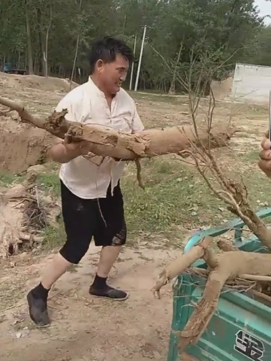 大衣哥花五十万投资旅游,让大衣嫂捡树枝?网友:农村人真会玩!