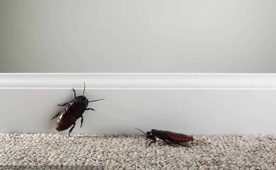 <b>家里有蟑螂不用愁,把它放在角落,几天后蟑螂消失了,实用</b>