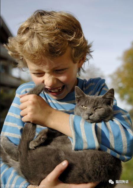 想要撸猫必先学会抱猫,你真的会抱猫吗?