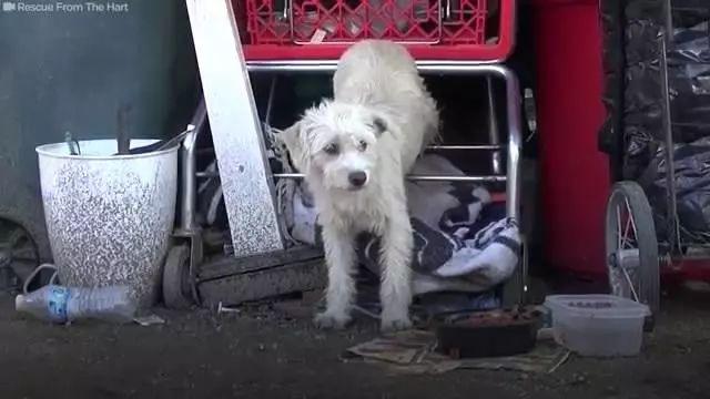 <b>住在废弃购物车底下的怀孕流浪狗,肯定没想到它和孩子如此好运</b>