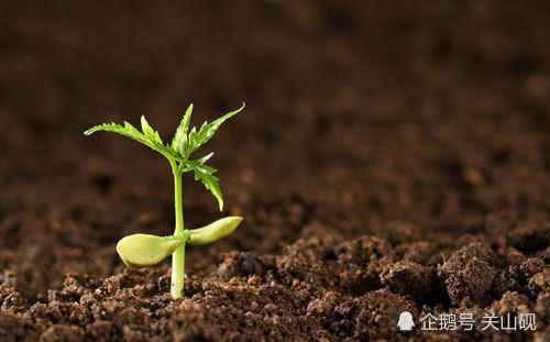 殷忧启圣,多难兴邦,为何逆境中反而更能成长