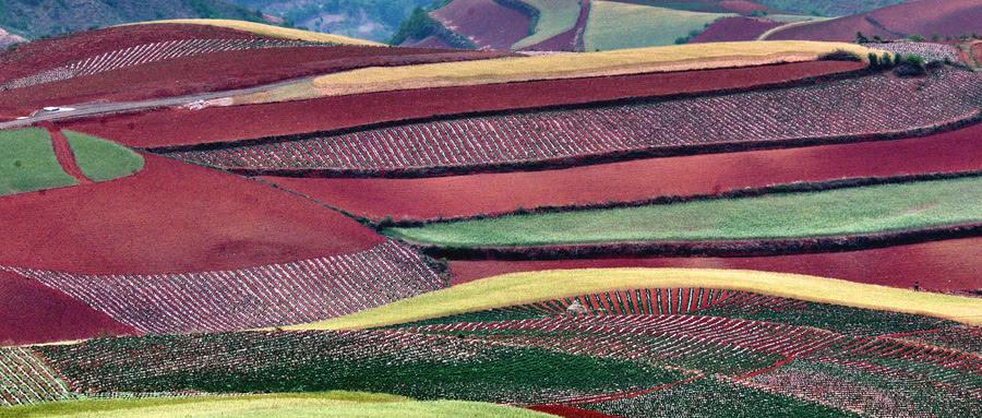 国家出台了新的土地承包法,可是很多农民却不开心,这是为何