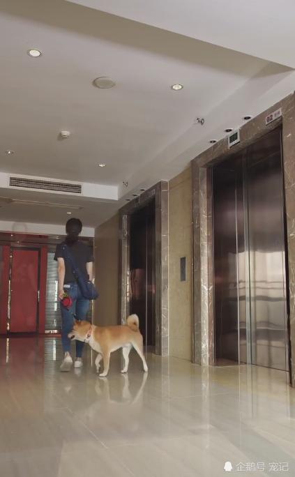 带狗狗乘电梯,却被众人嫌弃无奈等候下一班,可这一等就是好久!
