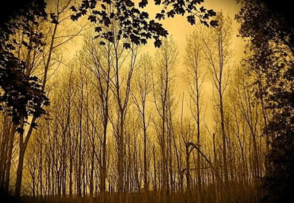 苏轼被贬黄州后写的一首词,读来使人耳目为之一新心情舒适!