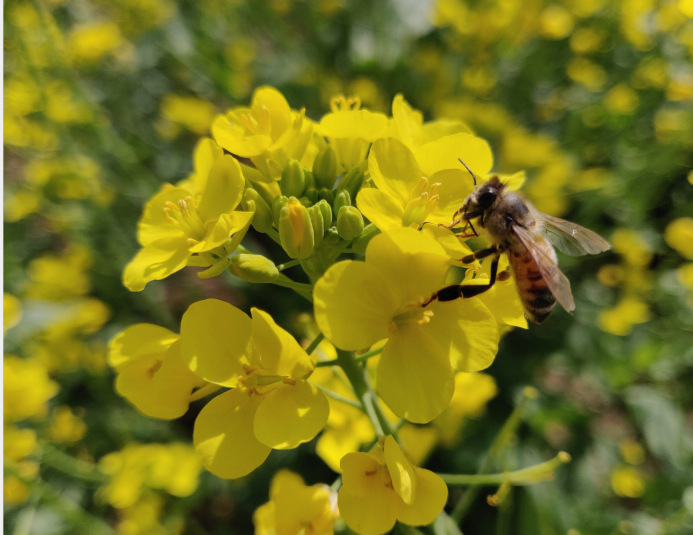 解密甜蜜的真相——蜜蜂的食物