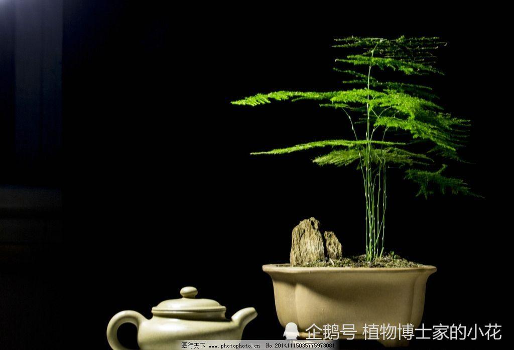 办公桌上适合放什么植物这几种一定不要错过!