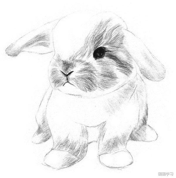 手工/爱好 > 书画/音乐  素描兔子的绘画步骤五 6,从鼻子开始向外画